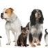 Gyvūnų prieglauda - Utenos rajono gyvūnų globos namai