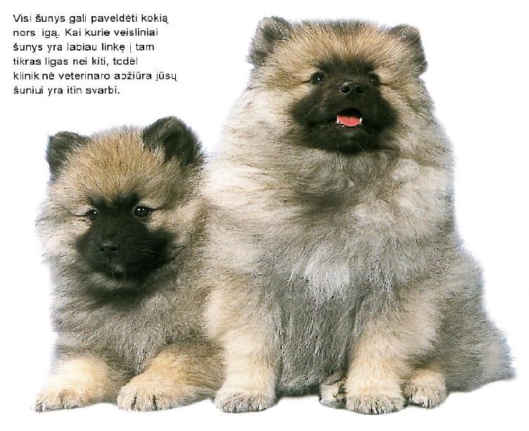 natūralūs širdies sveikatos šunys)
