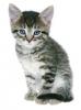 Gyvūnų prieglauda - Plungės naminių gyvūnų globos ir kontrolės tarnyba