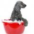 Gyvūnėlių prieglauda - Lietuvos gyvūnų globos draugijos Raseinių skyrius