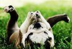 Šuniuko priežiūra ir auklėjimas (1.)