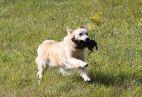 Paukštinių šunų lauko bandymų taisyklės