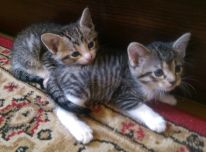 2 men.kačiukus
