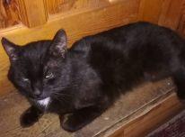 Dovanojamas juodas kačiukas