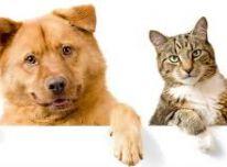 Kokybiškas maistas katėms ir šunims