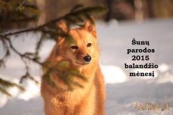 Šunų  parodos 2015 balandį