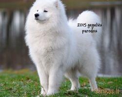 Šunų parodos 2015 gegužę