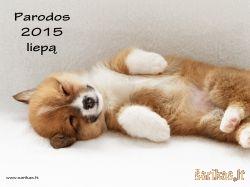 Šunų parodos 2015 liepą